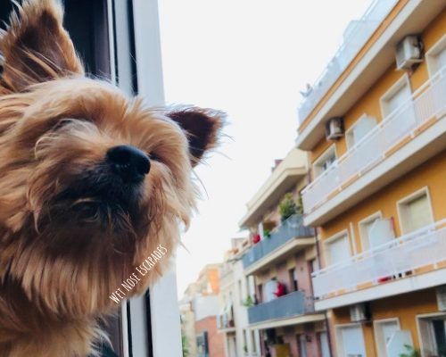 Is Barcelona Dog-Friendly? 10 Things to do with Your Dog in Barcelona