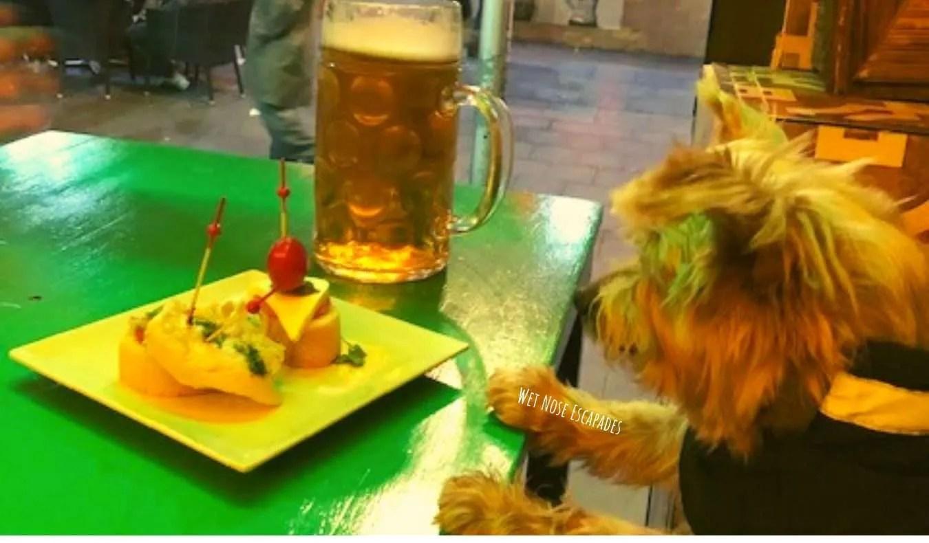 Yorkie dog at Pintxos bar in Barcelona