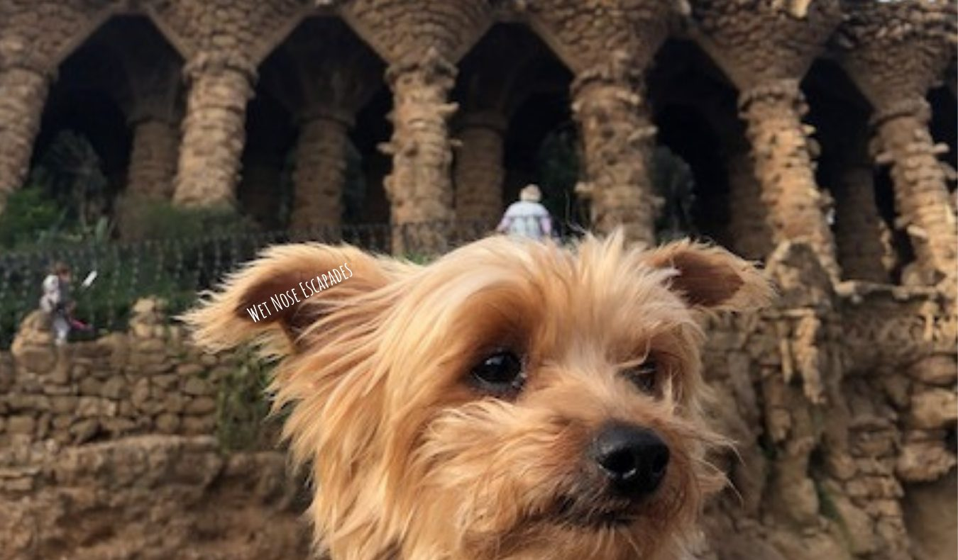 Yorkie Dog at Parc Guell in Barcelona