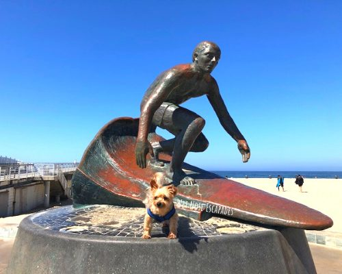 Is Hermosa Beach Dog-Friendly? 8 Things to do in Hermosa Beach with Your Dog