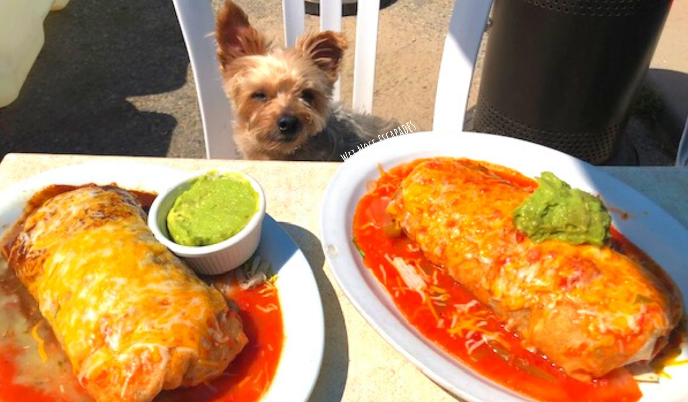 dog friendly restaurants Hermosa Beach, CA