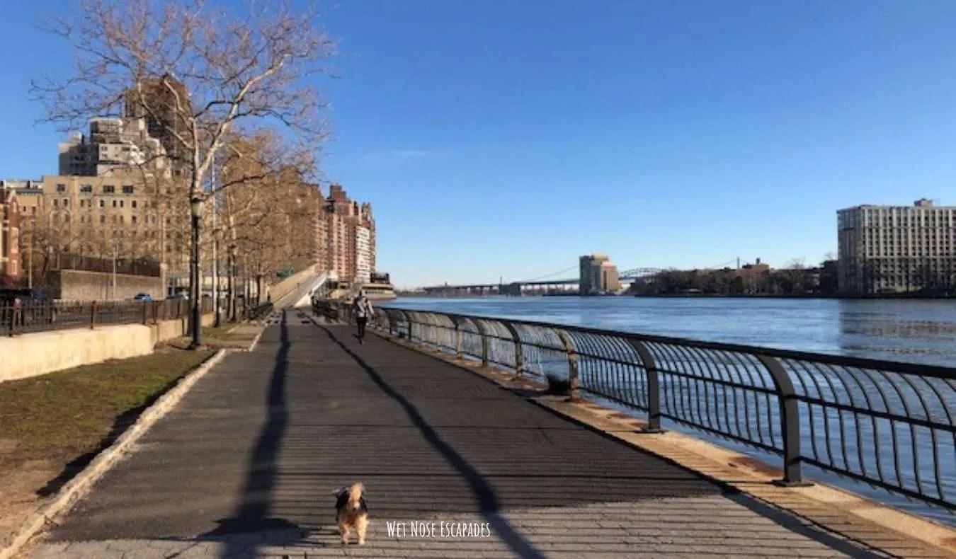 Yorkie dog East River Walk on the Upper East Side