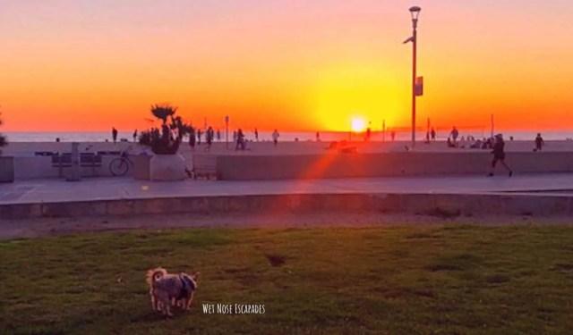 dog friendly noble park in hermosa beach ca