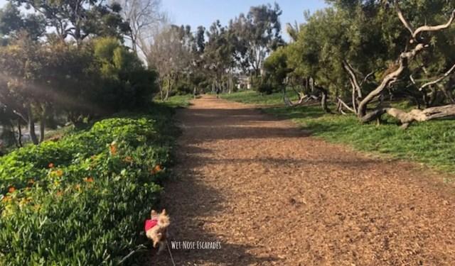 dog friendly Greenbelt Park Trail