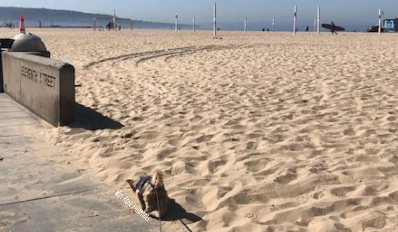 dog friendly The STrand Hermosa Beach, CA
