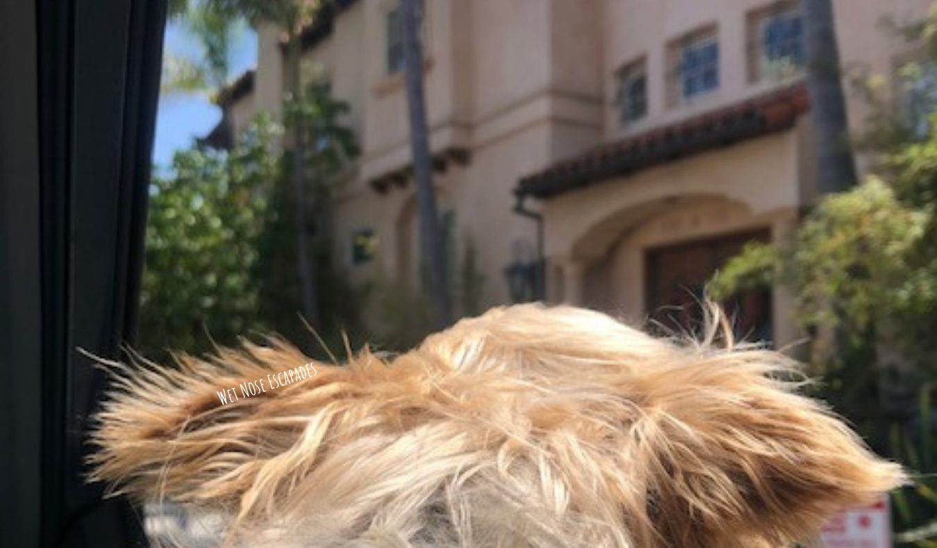 Is Manhattan Beach Dog-Friendly? 8 Things to do in Manhattan Beach, CA with Your Dog