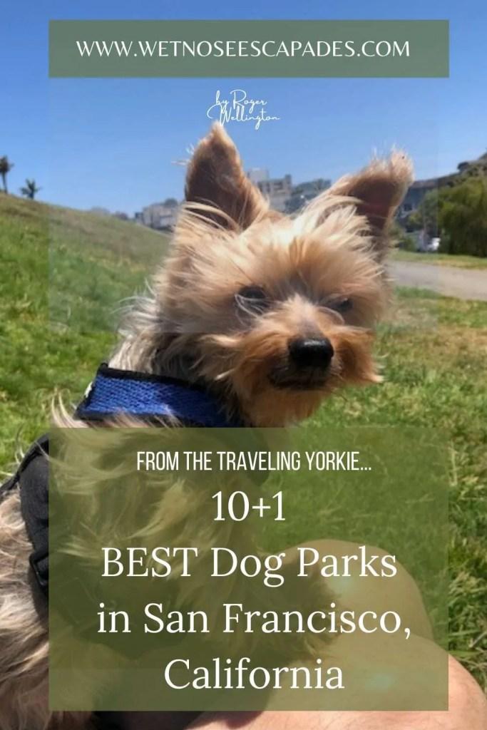 10+1 BEST Dog Parks in San Francisco, California
