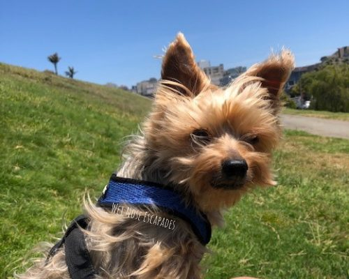 10+1 BEST Dog Parks in San Francisco, California_Dog friendly Alta Plaza Park
