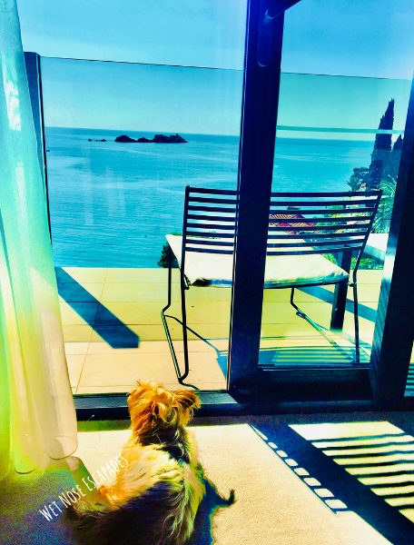 Yorkie Dog traveling in Croatia