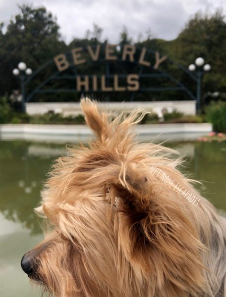 9 Dog-Friendly Activities in Beverly Hills, CA