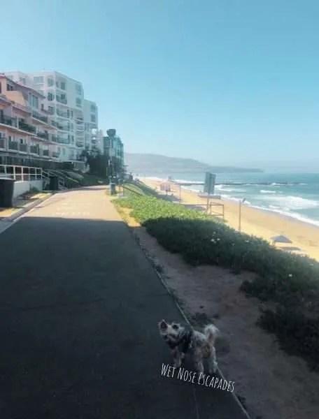 dog-friendly esplanade Redondo Beach