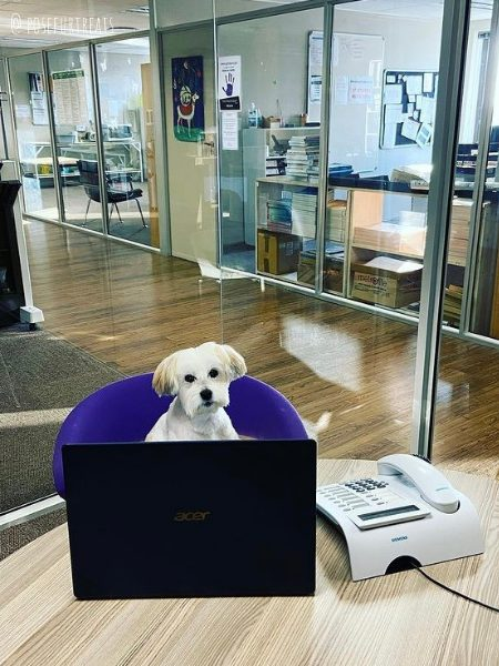 dog friendly cape town south africa