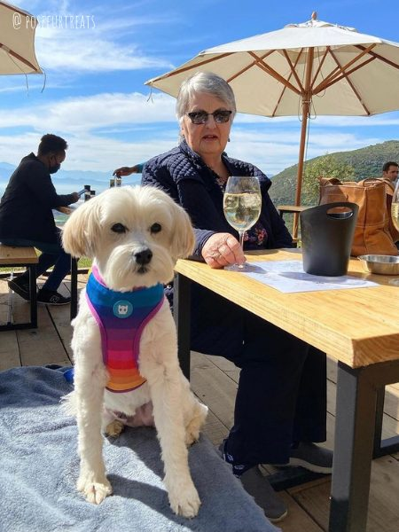 dog friendly eight feet village in cape town south africa