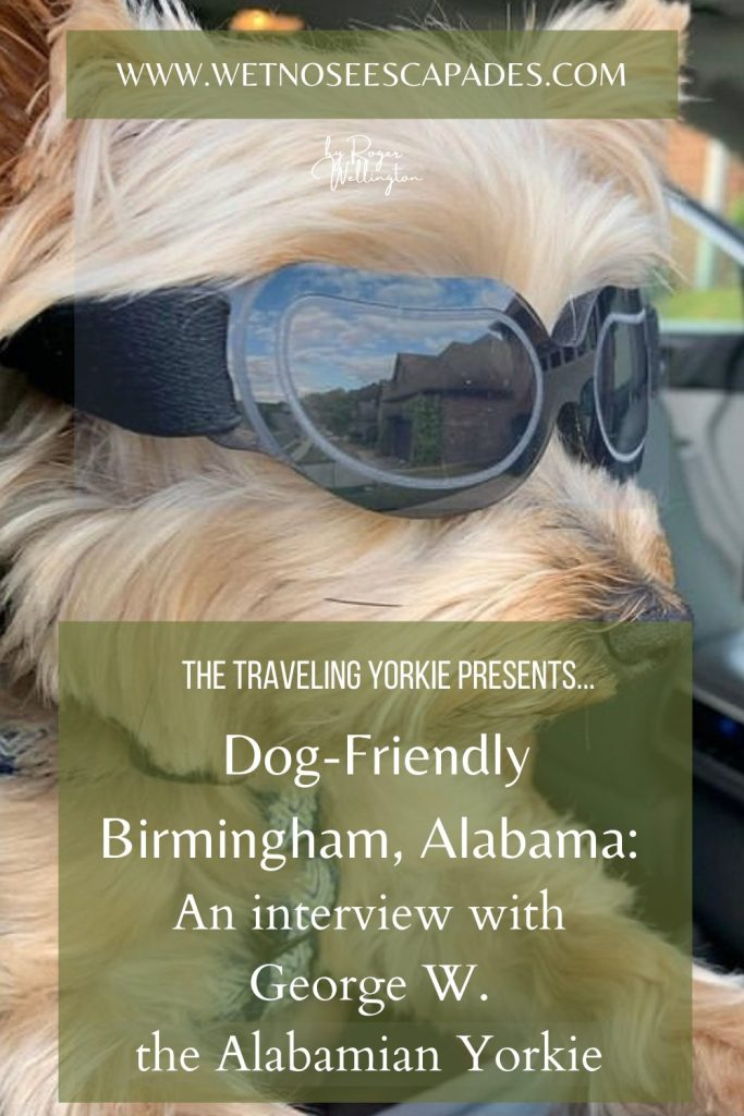 Dog-Friendly Birmingham: An interview with George W. the Alabamian Yorkie