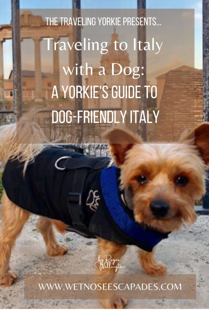 Traveling to Italy with a Dog: A Yorkie's Guide to Dog-Friendly Italy