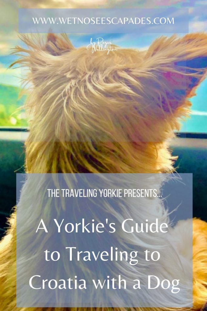 A Yorkie's Guide to Traveling to Croatia with a Dog