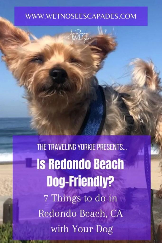 Redondo beach dog policy