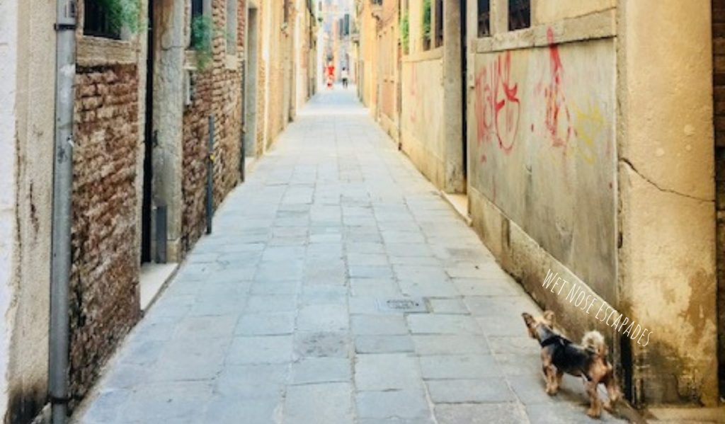 Yorkie dog in Venice, Italy