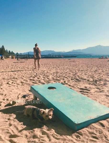 dog friendly beaches south lake tahoe