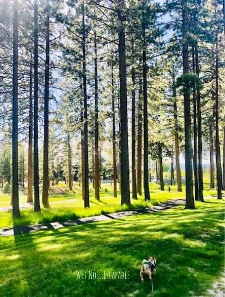 dog friendly hike in south lake tahoe