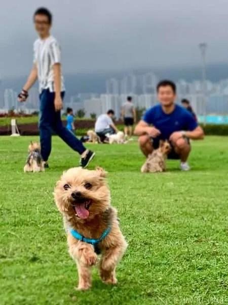 Kai Tak Runway Park - dog friendly