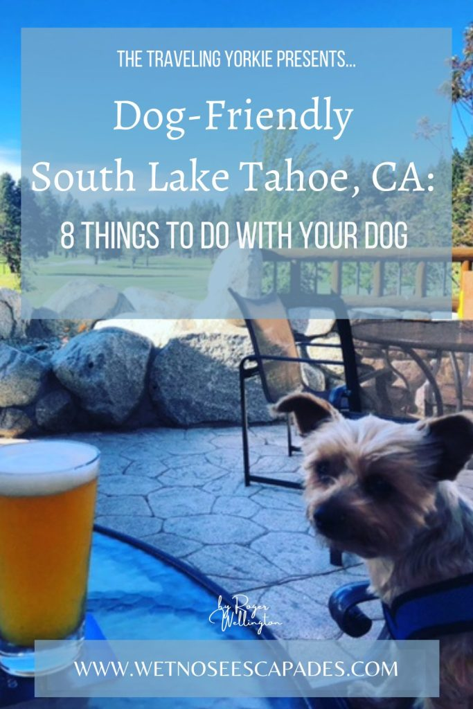 Dog-Friendly South Lake Tahoe: 8 Things to do with Your Dog