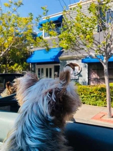 dog friendly downtown sausalito