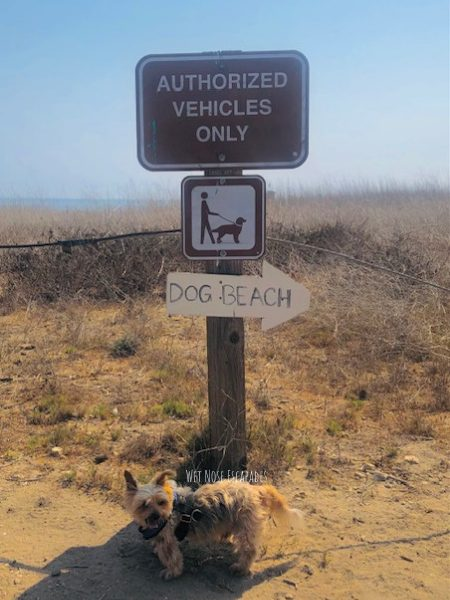 The REAL Bark about Dog-Friendly Beaches in Malibu