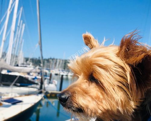 7 AMAZING Things to do with Your Dog in Sausalito, CA