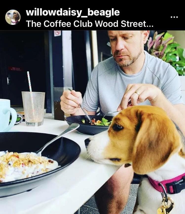dog friendly restaurants in mackay queensland australia