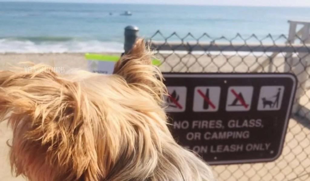 malibu beach dog rules