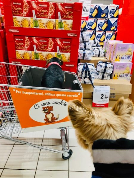 dog friendly markets and grocery stores in rome, italy