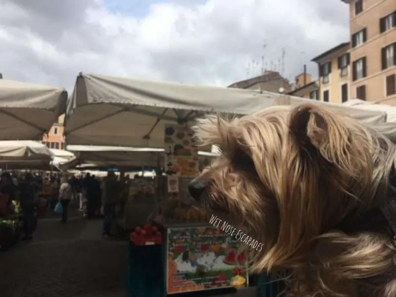 dog friendly squares in rome, italy (Campo de' Fiori)