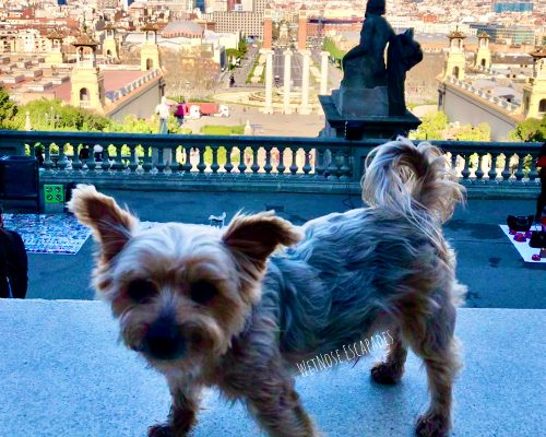 Traveling to Europe from the U.S. with a Dog