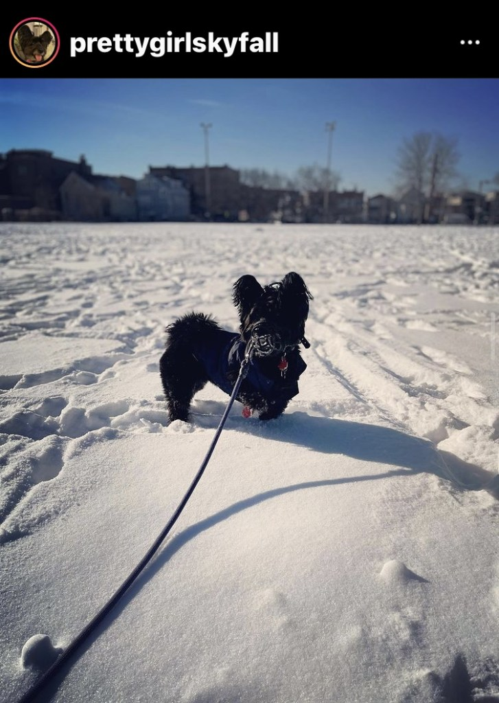 dog friendly chicago in the winter