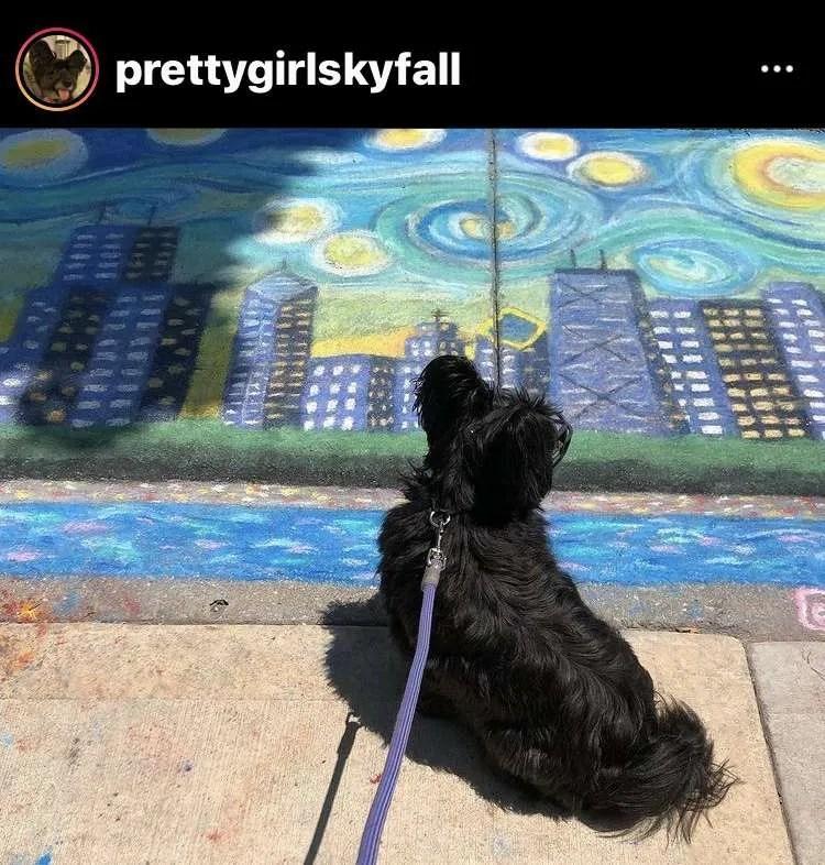 sky terrier in chicago