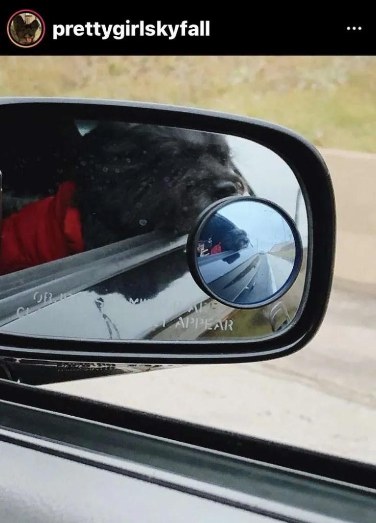 dog travel chicago