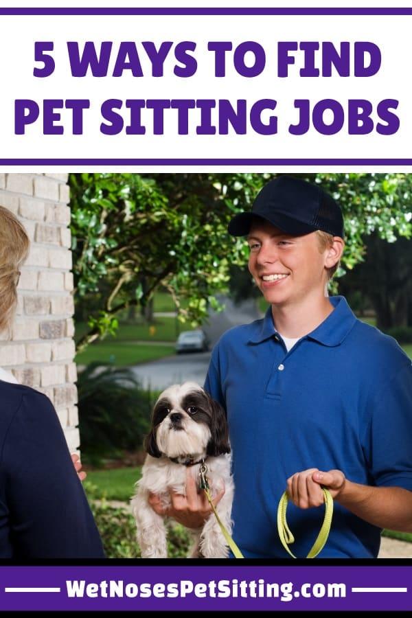 Craigslist Fort Collins Pets : craigslist, collins, Sitting, Noses