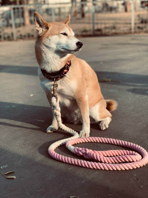Correa WeTop Dogs Modelo MissRoma Rosa 100% Algodón
