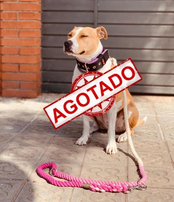 correa_perro_algodon_wetopdogs_fucsia