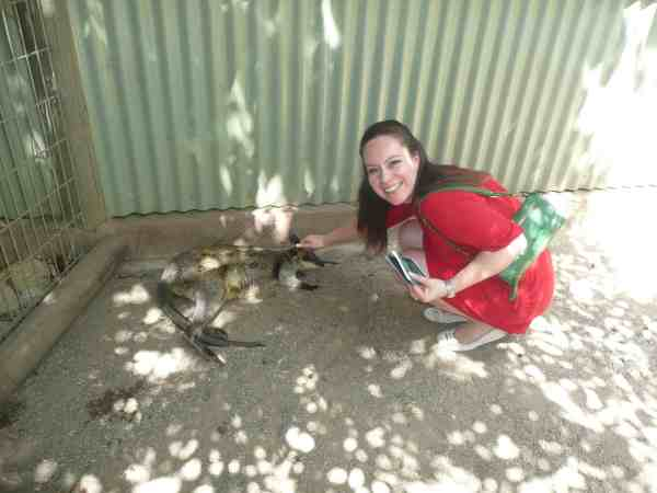 Best Things to Do in Sydney Australia Featherdale Wildlife Park