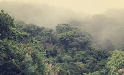 Ich liebe den Regenwald.