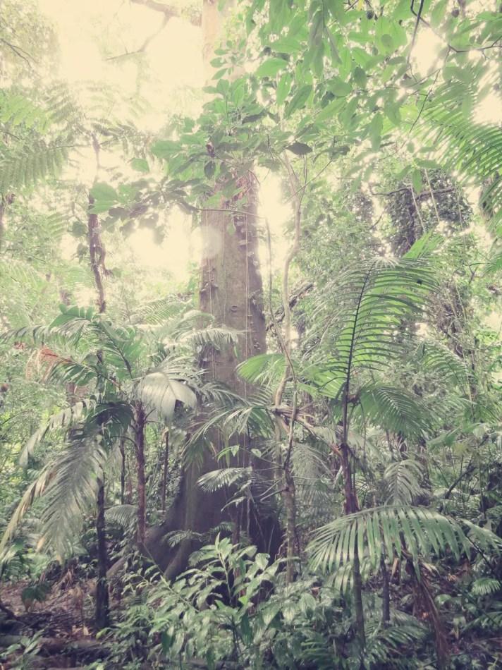 Der Name Regenwald war heute wieder Programm