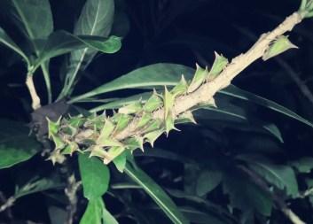 Kennt jemand diese Insektenart?