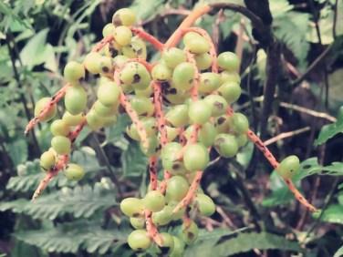 Dschungel Jelly Beans