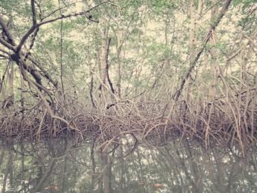 Mangroven im Parque Nacional Marino Las Baula de Guanacaste