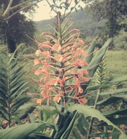 Auf dem Weg zum Vulkan gibt es eine riesige Blumenvielfalt