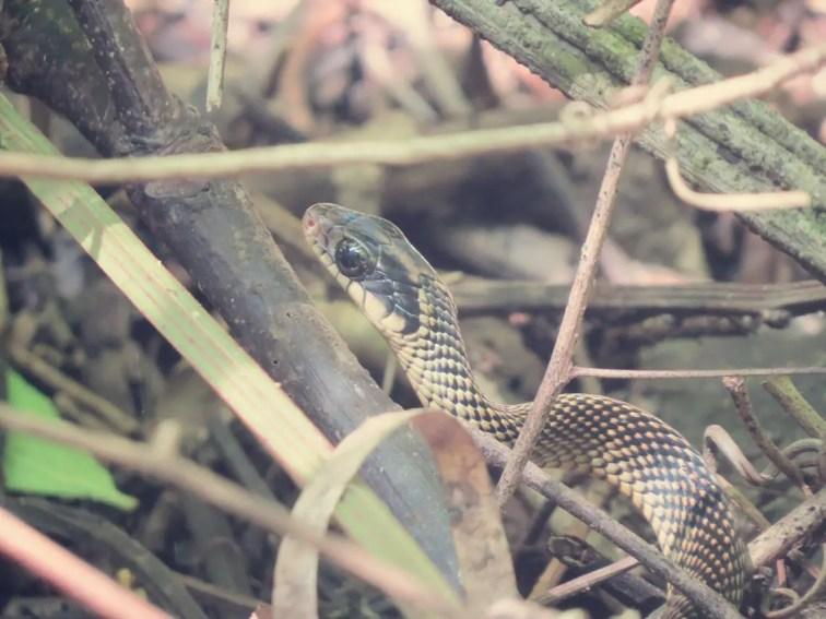 ... und Schlangen.