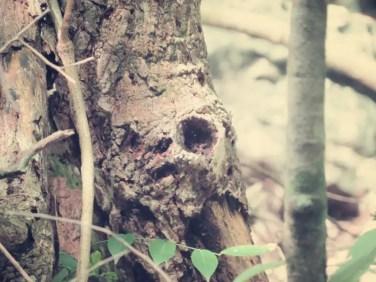 Sieht aus als sei ein Faultier mit dem Baum versteinert
