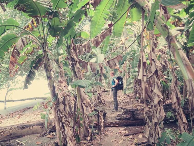 Vorbei an Bananen und Palmen